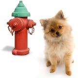 Hond en Hydrant Stock Afbeelding