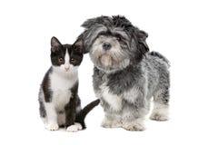 Hond en kat royalty-vrije stock afbeeldingen