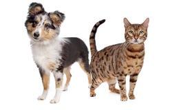 Hond en kat Royalty-vrije Stock Afbeelding
