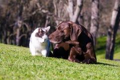 Hond en Kat Stock Afbeeldingen