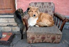 Hond en kat Royalty-vrije Stock Foto