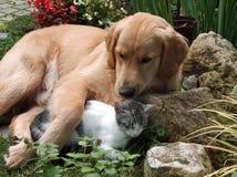 Hond en kat Stock Foto