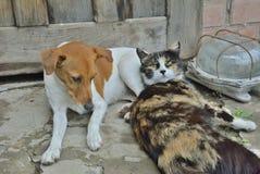 Hond en kat 1 Stock Afbeelding