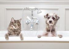 Hond en Kat in Badkuip samen Stock Foto's