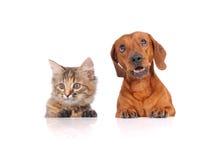 Hond en Kat boven witte banner Stock Foto