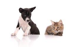 Hond en Kat boven witte banner Royalty-vrije Stock Foto's