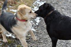 Hond en kat die samen als beste vrienden spelen Stock Foto's