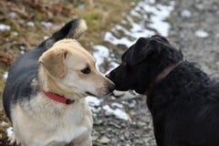 Hond en kat die samen als beste vrienden spelen Royalty-vrije Stock Afbeelding