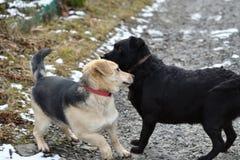Hond en kat die van dezelfde schotel zoals beste vrienden eten Stock Foto