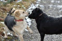 Hond en kat die van dezelfde schotel zoals beste vrienden eten Royalty-vrije Stock Foto