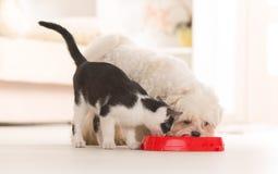 Hond en kat die voedsel van een kom eten Stock Afbeeldingen
