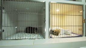 Hond en kat in kooi na chirurgie stock video