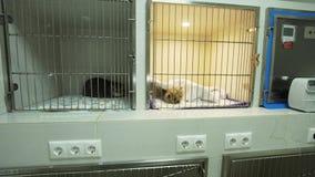 Hond en kat in kooi na chirurgie stock footage