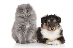 Hond en kat samen op witte achtergrond Stock Foto