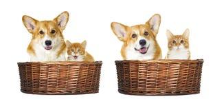 Hond en katjes het kijken Royalty-vrije Stock Fotografie