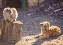 Hond en katten het beste vrienden openlucht spelen samen Stock Afbeeldingen