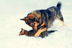 Hond en katten het spelen in de sneeuw Stock Foto's