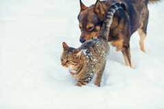 Hond en katten het spelen samen in de sneeuw Stock Afbeelding