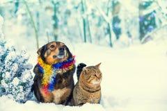 Hond en kattenzitting samen dichtbij Kerstboom royalty-vrije stock afbeelding