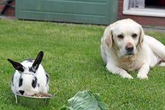 Hond en konijn Royalty-vrije Stock Afbeelding