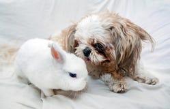 Hond en konijn het spelen Stock Afbeelding