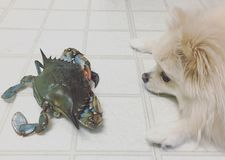 Hond en Krab Royalty-vrije Stock Fotografie