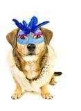 Hond en masker Royalty-vrije Stock Afbeelding