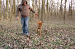 Hond en meester Royalty-vrije Stock Afbeelding