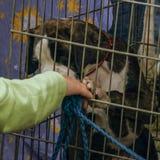 Hond en meisje Stock Foto