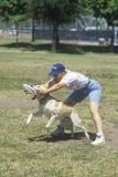 Hond en mensen het praktizeren bij Hondsfrisbee-Wedstrijd, Westwood, Los Angeles, CA Royalty-vrije Stock Afbeelding