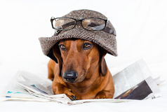 Hond en newspapper Stock Afbeeldingen