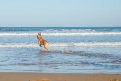 Hond en overzees royalty-vrije stock afbeeldingen