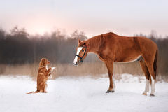 Hond en paard in openlucht in de winter Stock Afbeelding