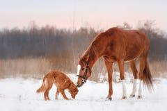Hond en paard in openlucht in de winter Stock Foto's