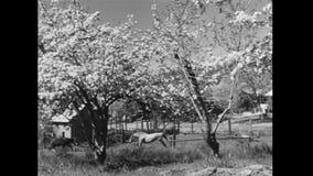 Hond en paarden die op gebied lopen stock footage