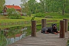 Hond en Papegaai in HDR royalty-vrije stock fotografie