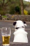 Hond en Pint Royalty-vrije Stock Afbeelding