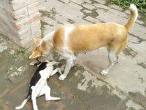 Hond en Puppy Royalty-vrije Stock Afbeeldingen