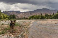 Hond en rivier royalty-vrije stock foto
