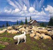 Hond en Schapen in de bergen royalty-vrije stock foto