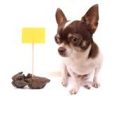 Hond en shit Royalty-vrije Stock Afbeelding