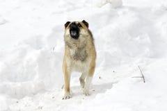 Hond en sneeuw Stock Fotografie