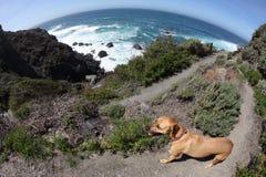 Hond en Steile Sleep bij Vreedzame Oceaan Stock Afbeeldingen