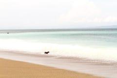 Hond en strand Stock Foto's