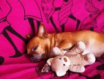 Hond en stuk speelgoed Royalty-vrije Stock Afbeeldingen