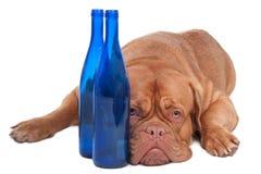 Hond en twee flessen royalty-vrije stock afbeeldingen