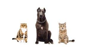 Hond en twee katten stock afbeelding
