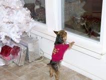Hond en twee Katten bij Kerstboom Stock Foto