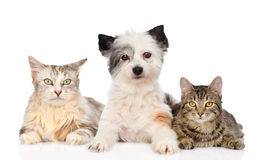 Hond en twee katten samen Geïsoleerdj op witte achtergrond Stock Afbeeldingen