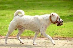 Hond en van de hondmond dekking Royalty-vrije Stock Foto